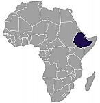 Ethiopian Sidamo (12 oz.)